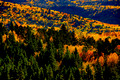 Autumn Splendor in Pike National Forest
