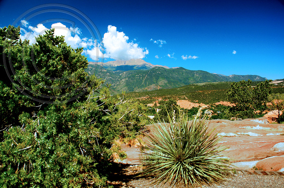 Pikes Peak and a Yucca Plant