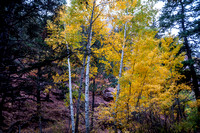 Aspens, North Cheyenne Canyon, October, 2016